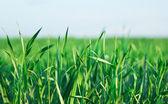 綠草地 — 图库照片