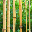 Bamboo fence - 