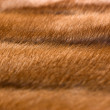 Mink fur - Stock Photo