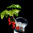 Twig with of red currants in glass — Stock Photo #3479772