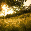 Stock Photo: Sunset in the field