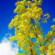 Autumn tree on a background of the sky — Stock Photo #2789211