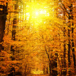 Sunrise in autumn forest — Stock Photo #3677362