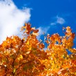 Crone of a autumn tree — Stock Photo
