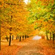 Orange autumnal park — Stock Photo