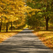 Lane in the autumn park — Foto Stock