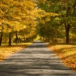 Lane in the autumn park — Stock Photo