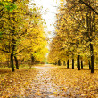 Bridhtly autumn alley — Stock Photo