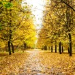 Stock Photo: Bridhtly autumn alley