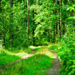 Green forest road — Stock Photo