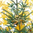 Pine on the blurry backgroud of yelow autumn foliage — Stock Photo