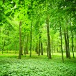Stock Photo: Foliage green forest