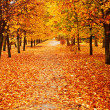Orange autumn alley — Stock Photo