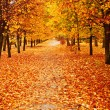 Orange autumn alley — Stock Photo #3706584