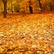Stock Photo: Autumn park after a rain