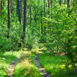 Road in green forest — Stock Photo