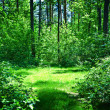 Green glade in summer sunny forest — Stock Photo #3813054