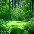 Green glade in summer sunny forest - Stock Photo