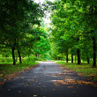 Small road in green park — Stock Photo