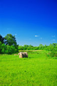 Rural green field — Stock Photo