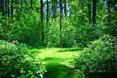 Green glade in summer sunny forest — Stock Photo