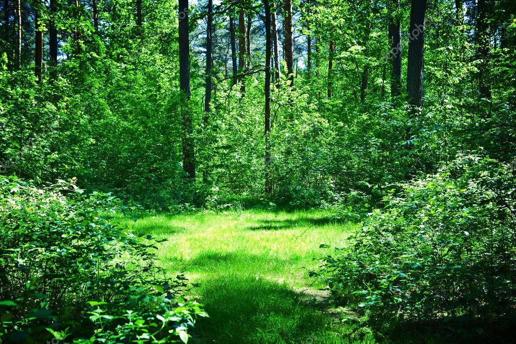 depositphotos_3813054-Green-glade-in-summer-sunny-forest.jpg (1023×682)