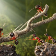 Team of ants breaking down rusty tree — Stock Photo