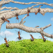 Team of ants taking branch from old tree — Stock Photo