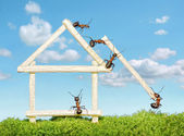 Team of ants constructing wooden house — Stock Photo