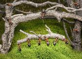 Takım karıncalar paslı orman günlüğüne taşır — Stok fotoğraf
