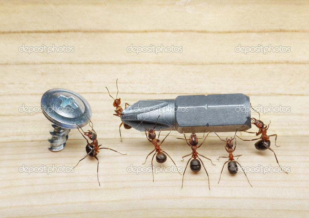 Team of ants carries screwdriver to screw on wood, teamwork — Stock Photo #3721070