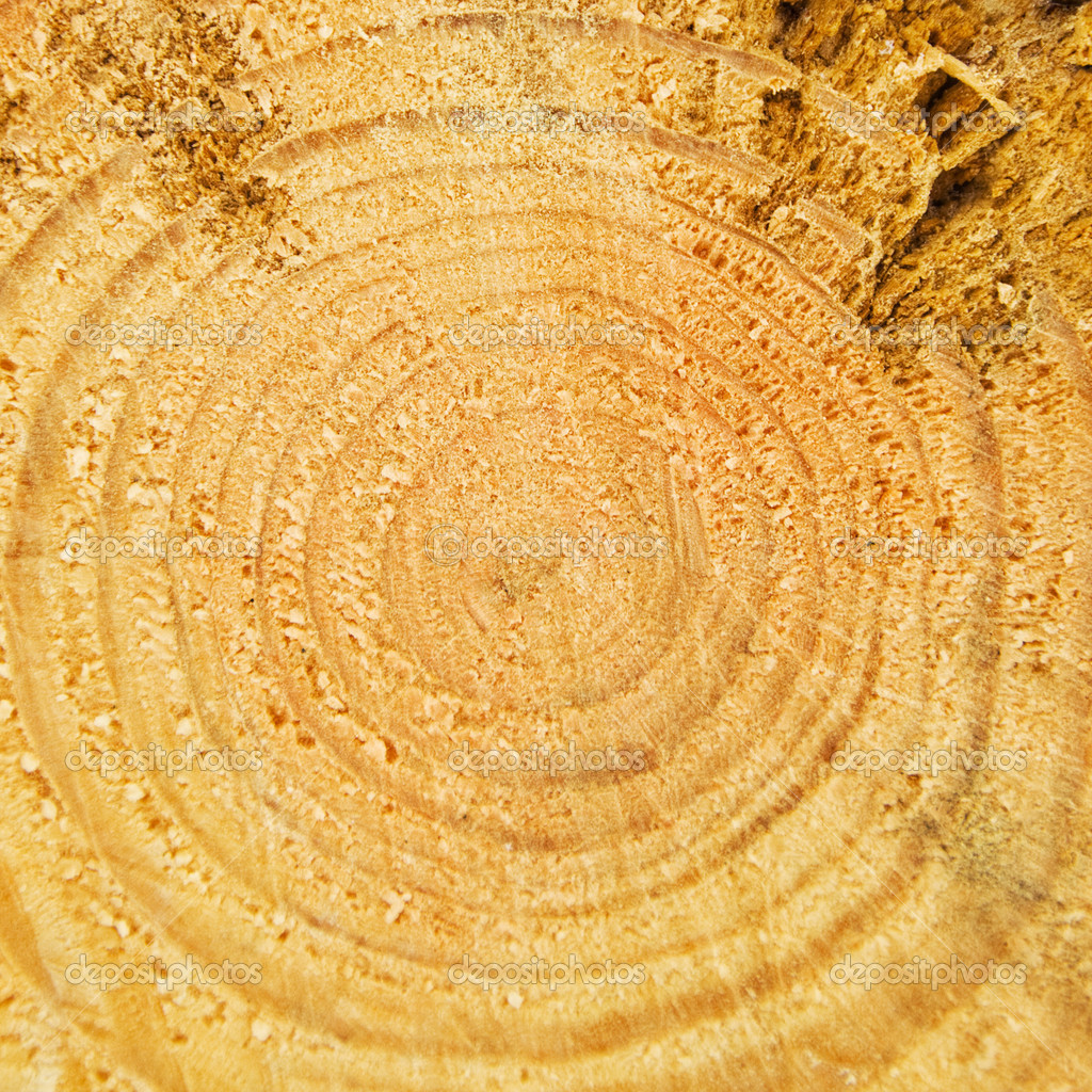 Cut of tree trunk with the annual rings — Stock Photo #3084099