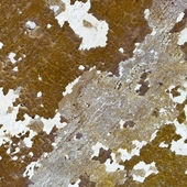 Weathered wall - background — Stock Photo