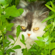 Cat hiding in grass - Lizenzfreies Foto