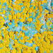 Surface of cracked paint blue and yellow - Stock fotografie