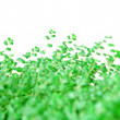 Background from green vegetation — Stock Photo