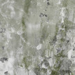 Concrete dirty green wall background — Stock Photo
