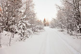Road to snow-covered wood - northern landscape — Stock Photo