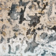 Mold stains on humid plaster — Stock Photo #3676889