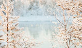 Sunny winter landscape - river — Stock Photo