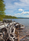 Big heap of rotten wood on bank of lake — Stock Photo