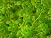 Exotic ornamental plants close up — Stock Photo