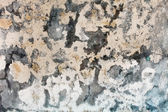 Mold stains on humid plaster — Stock Photo