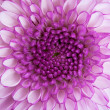 Close up - center of violet flower — Stock Photo #3703474