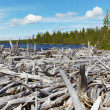 Dead wood on shore of Lake — Stock Photo