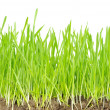Green grass — Stock Photo #2787123