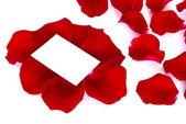 Okvětní lístky růže — Stock fotografie