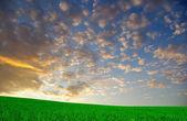 Landscape — Foto de Stock