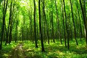 Orman yolu — Stok fotoğraf