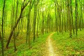 Skogsstigen — Stockfoto